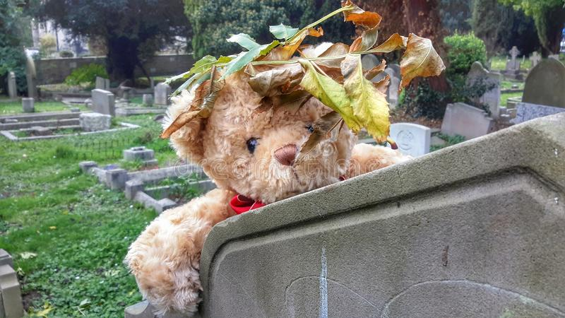 Spooked Bear. Scared bear in a cemetery on the eve of Halloween royalty free stock photography