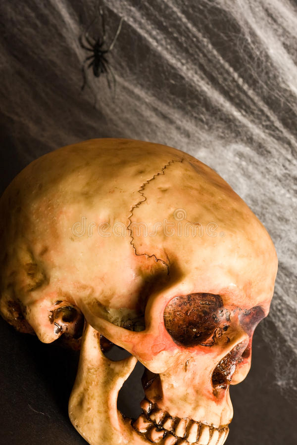 Spooky. Skull and cobwebs on black background stock photos