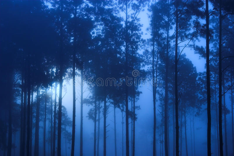 Spooky blue forest. Spooky blue toned forest background royalty free stock images