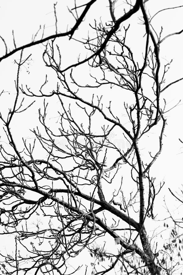 Spooky branches. Beautiful background shot of spooky branches stock image