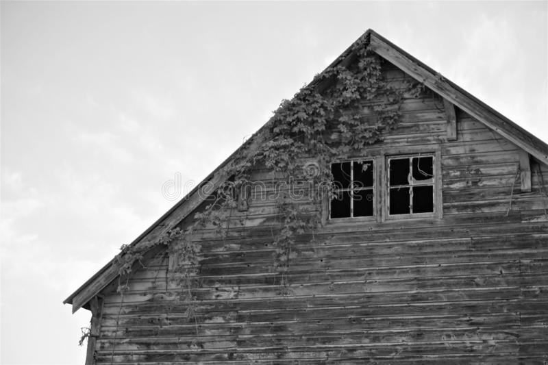 Spooky broken windows of rustic wooden barn. Roof apex in black and white of a derelict and abandoned barn house has horizontal slats of wood siding.  Ivy climbs stock images