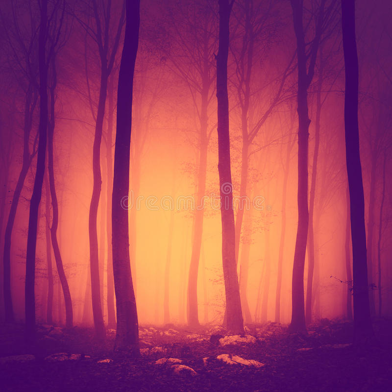 Spooky color light woods. Spooky purple red vintage color forest scene with yellow orange light in background royalty free stock photography