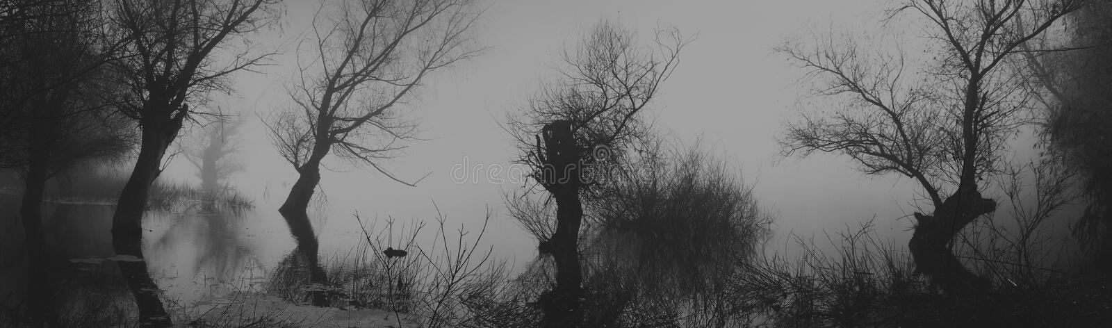 Spooky dark landscape showing silhouettes od trees in the swamp. On misty night stock photos