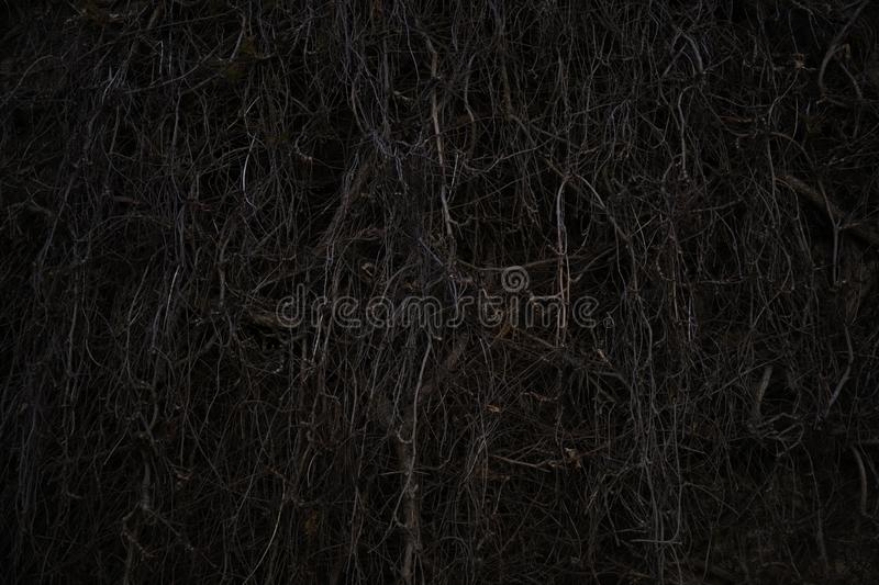 Spooky dry tree branch at night. Moody and scary, dark scene stock image