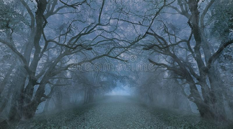 Spooky Halloween misty foggy forest night royalty free stock photo