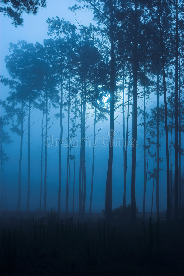 Spooky fog filled forest night royalty free stock images