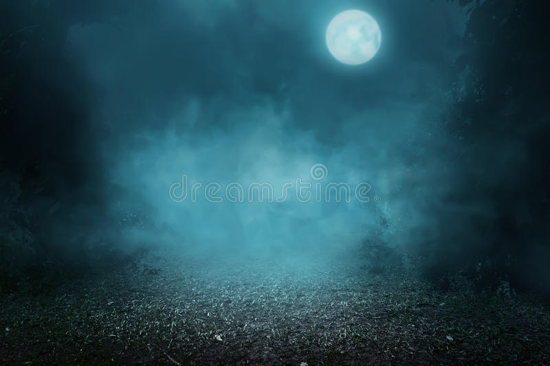 Spooky foggy forest royalty free stock photos
