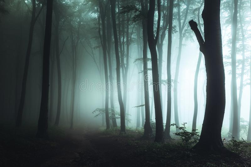 Spooky foggy forest trail. Dark trees in silhouettes with hard light coming from right. Horror landscape. Mysterious forest stock image