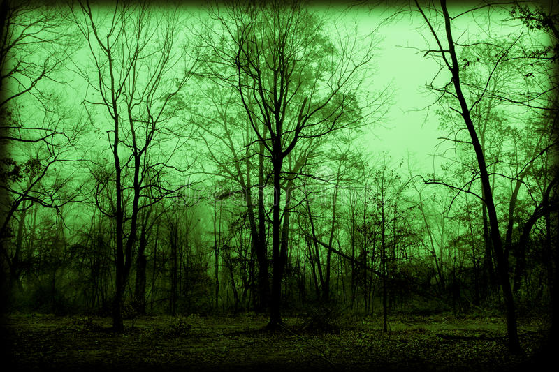 Spooky Foggy Woods stock photography