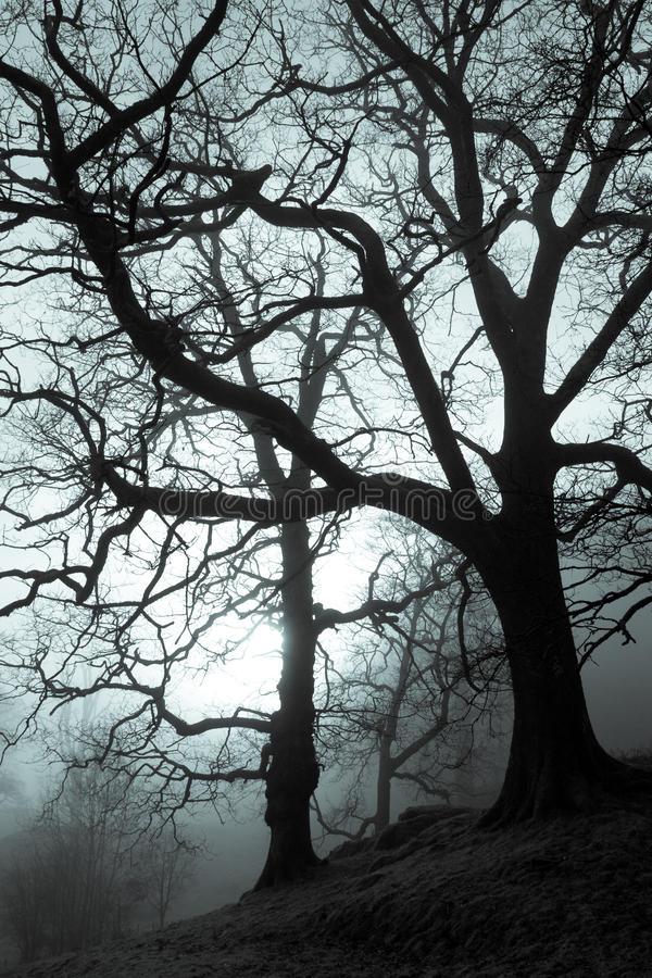 Download Spooky Forest stock photo. Image of midnight, contrast - 21467810