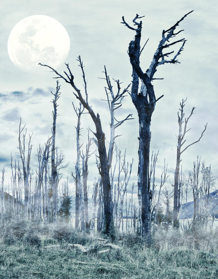 Download Spooky Forest Stock Photos - Image: 23915303