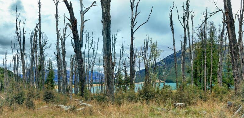 Spooky forest stock photos