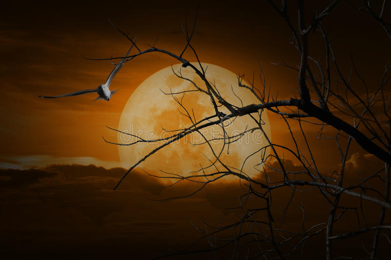Spooky forest with full moon, dead trees and bird, Halloween background royalty free stock images