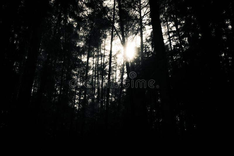 Spooky forest, horror atmosphere, black and white. Black and white photo of a forest, trees, light in center, horror atmosphere stock photography