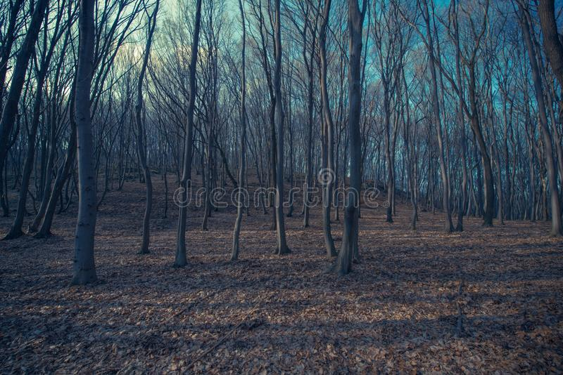 Spooky Forest Landscape. Nature Background. Late Fall Forest Scenery stock photography