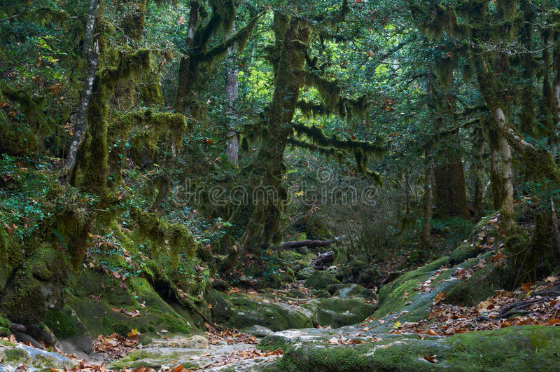 Spooky halloween autumn mossy forest stock photo