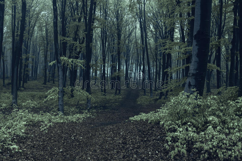 Spooky Halloween forest and mist stock photography