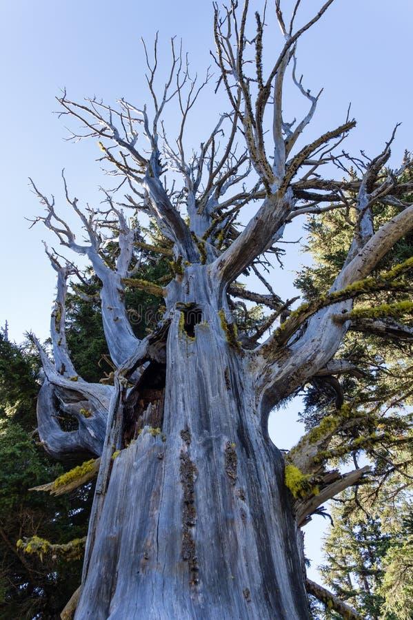 Spooky halloween-träd arkivfoton