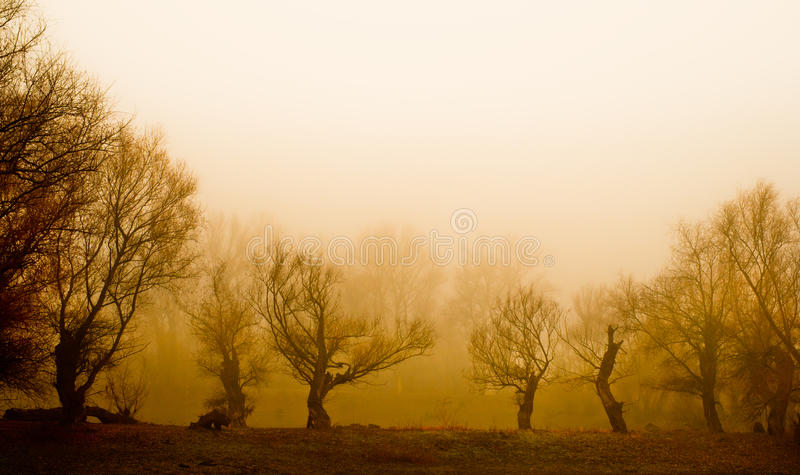 Spooky landscape showing remains of old forest stock image
