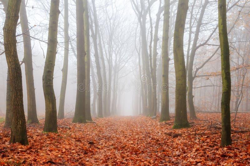 Spooky lane in autumn stock image