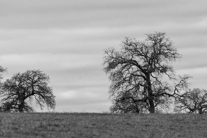 Spooky leafless trees on horizon in black and white. Some creepy, barren and leafless trees standing on the distant horizon silhouetted against a cloudy royalty free stock photos