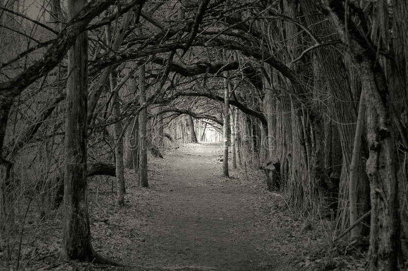 Spooky light at the end. Creepy forest with trees over hanging a path