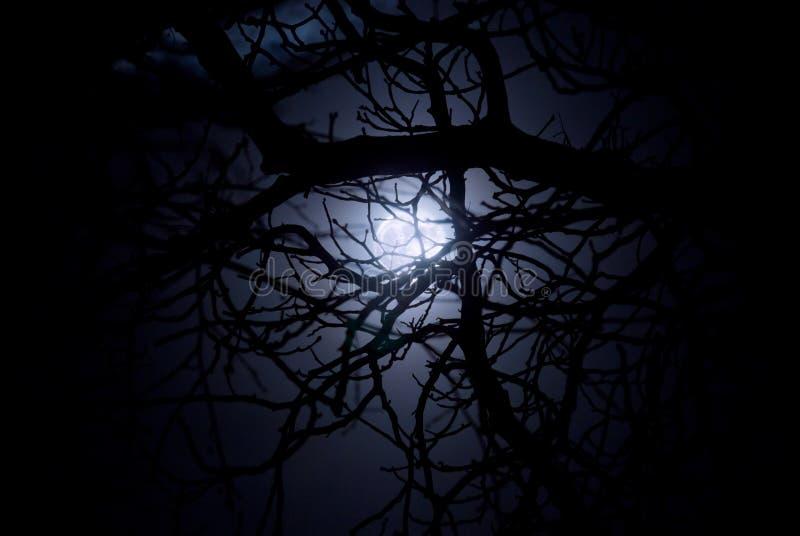 Spooky midnight moonlight royalty free stock photos