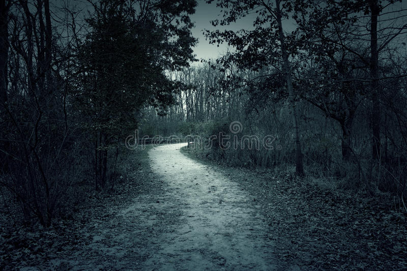 Spooky misty foggy forest with dramatic sky royalty free stock photos