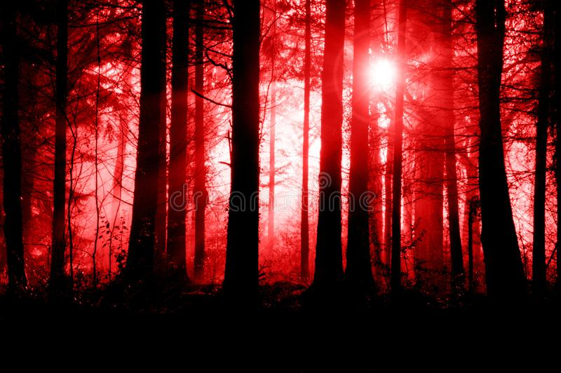 A spooky misty forest, with trees silhouetted by backlight and a glowing light in the sky. With a creepy, science fiction, horror,. Red edit royalty free stock photo