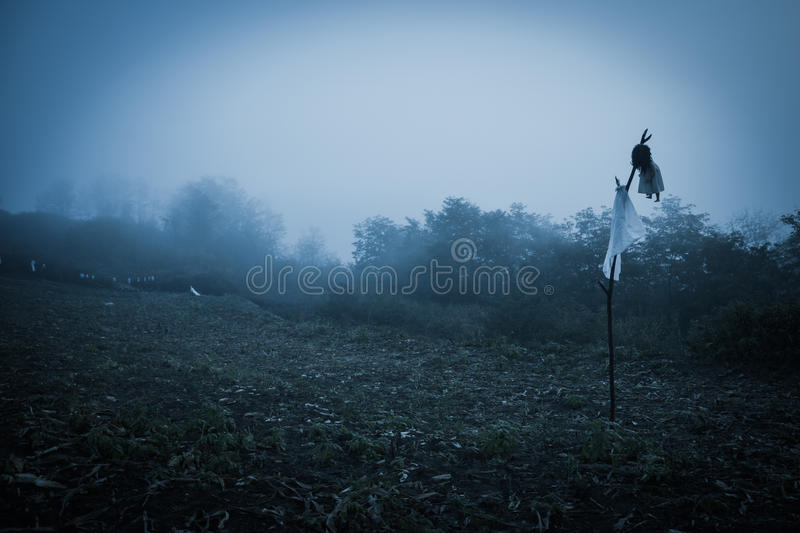 Spooky misty rainy forest. Located in Transylvania, Romania, Halloween holiday celebration background concept stock image