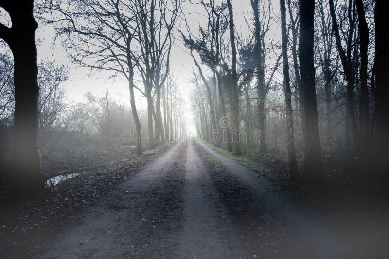 Spooky Mystery dark fog forest road stock photo