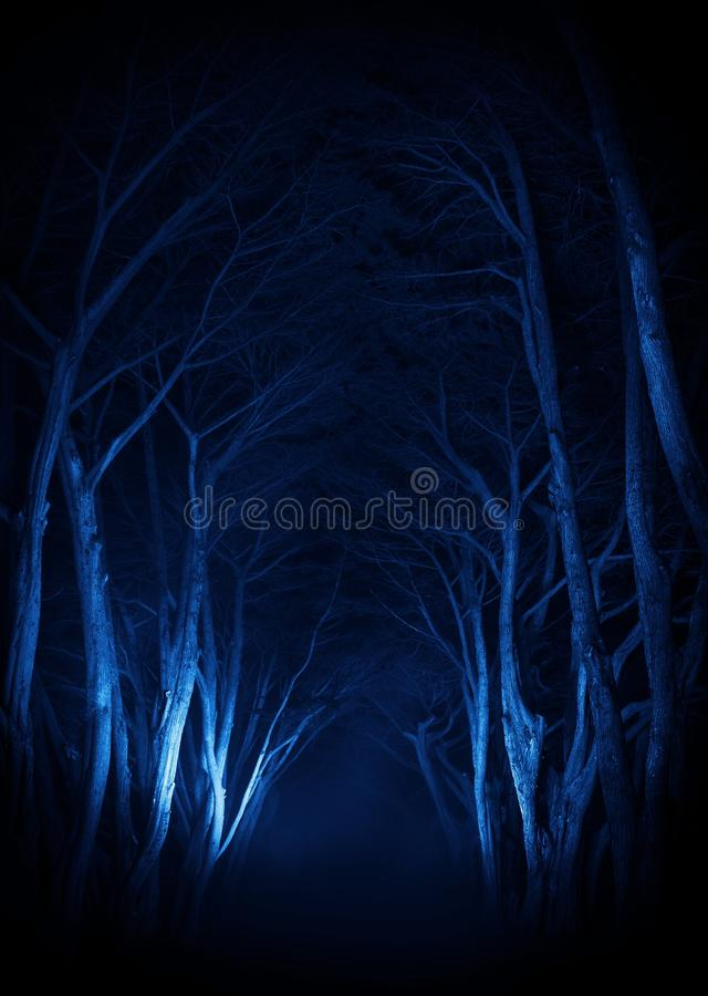 Free Spooky Old Trees Park Alley Stock Image - 53598711