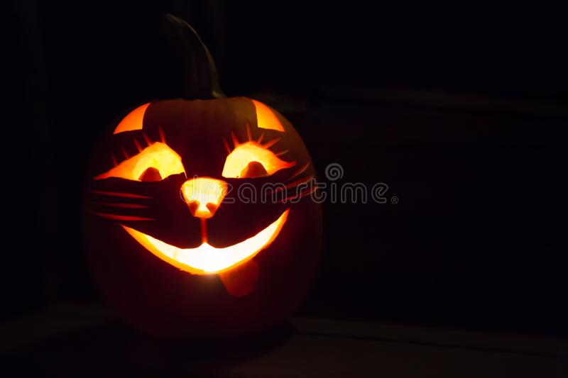 Halloween pumpkin carved cat darck background royalty free stock images