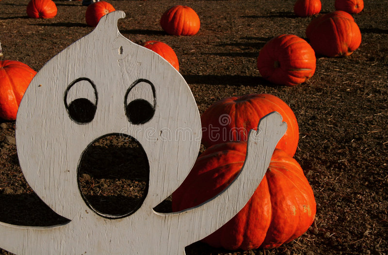 Download Spooky Pumpkin Patch stock image. Image of crop, ghost - 275913