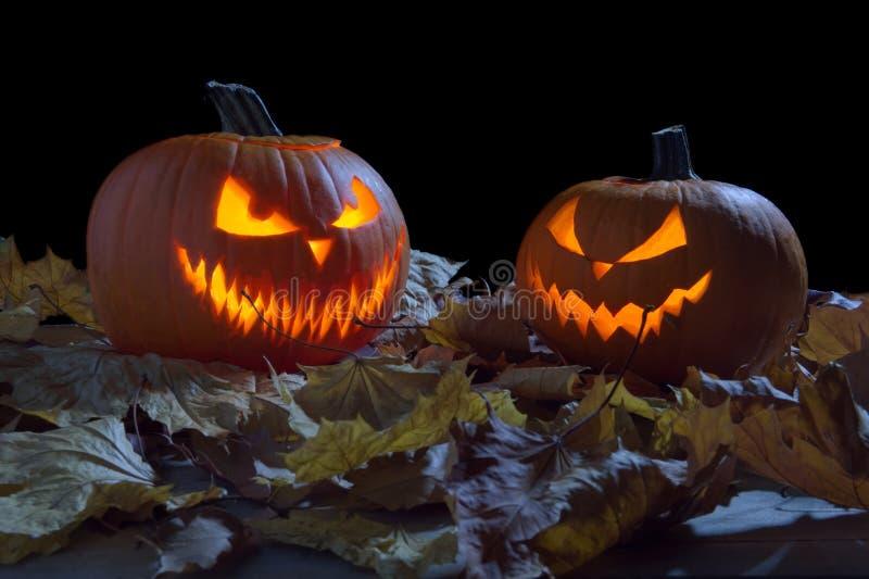 Spooky pumpkins as jack o lantern among dried leaves on black royalty free stock photo