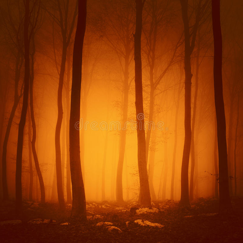 Spooky red color foggy forest. Spooky red saturated color forest scene with yellow orange light in background stock image