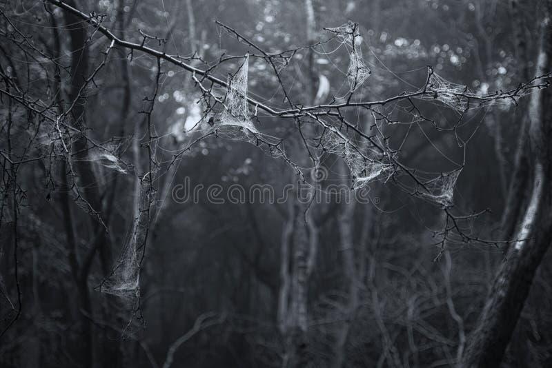 Spooky scary Halloween dead forest landscape with foggy background. Spooky Halloween dead forest landscape with foggy background stock photos