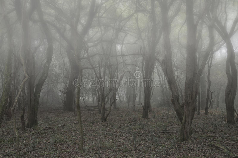 Spooky scary Halloween dead forest landscape with foggy background. Spooky Halloween dead forest landscape with foggy background stock photo