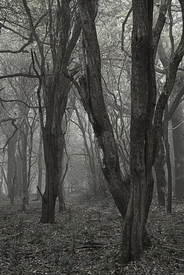 Spooky scary Halloween dead forest landscape with foggy background. Spooky Halloween dead forest landscape with foggy background stock photography