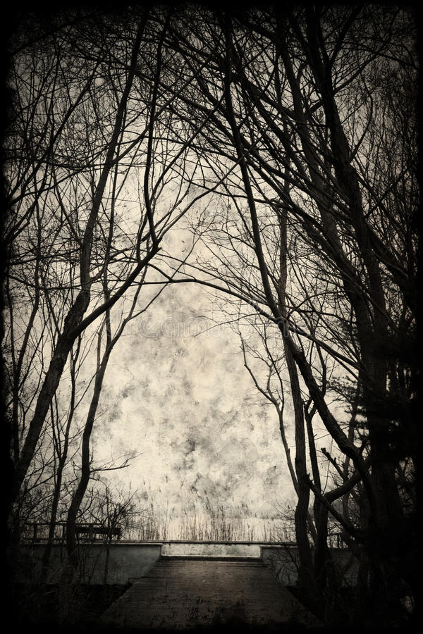Spooky silhouette with trees and a great sky. Grunge background stock photo