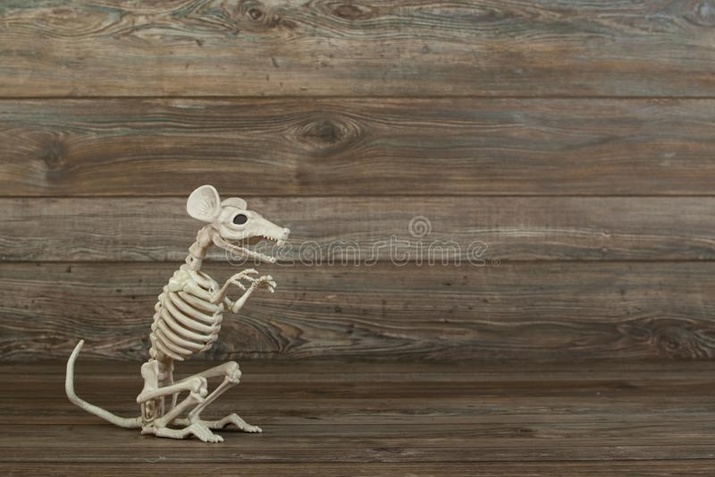 Skeleton rat on wood background royalty free stock photo