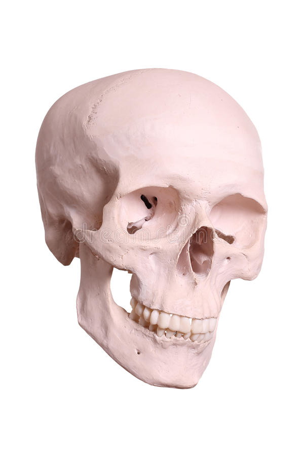 Spooky skull. On white background stock photo
