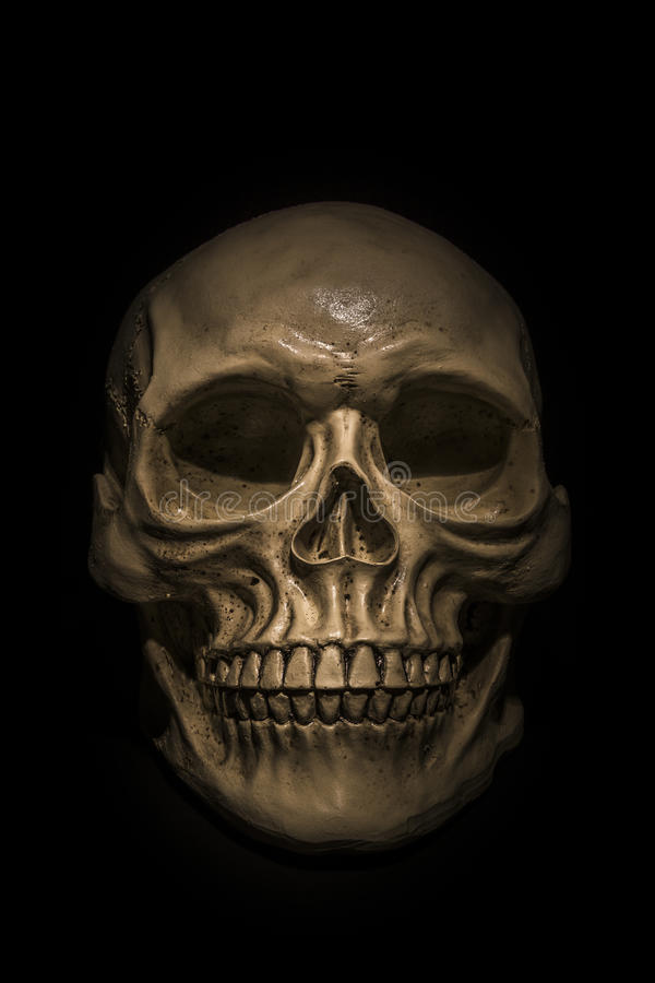 Spooky skull on black background. Great for halloween stock photo
