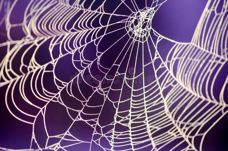 Spooky spider web against a purple background. A spooky, delicate spider web stands out against a deep purple background royalty free stock photos