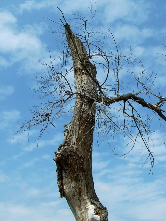 Spooky Tree Free Stock Photography