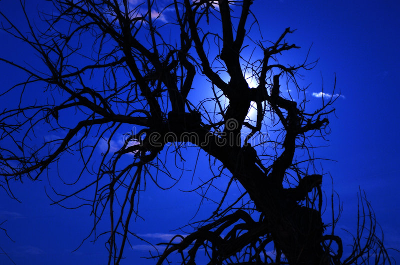Download Spooky Tree 7 Royalty Free Stock Image - Image: 1466956