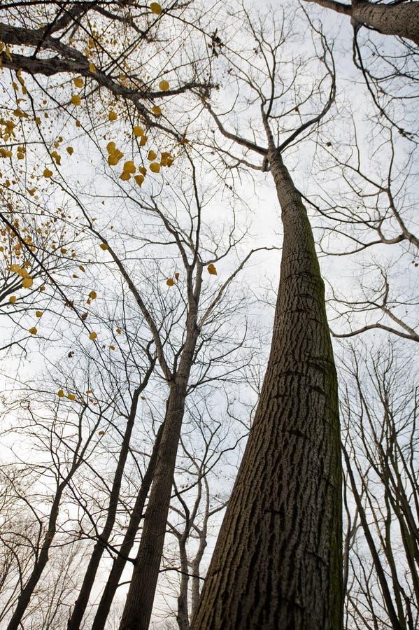 Spooky tree royalty free stock image