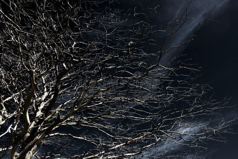 Spooky tree stock photography