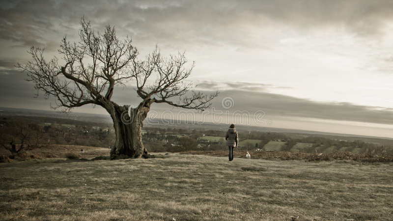 Spooky Tree with lone female royalty free stock image