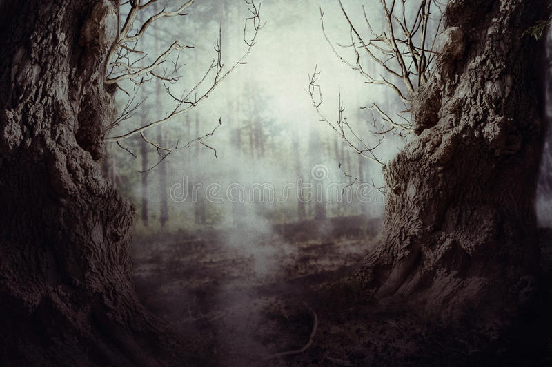 Spooky Tree in Night Mist. Halloween night background with spooky forest trees in fog royalty free stock photo